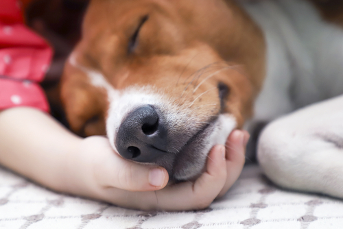 What do Vets do After They put a Dog to Sleep?