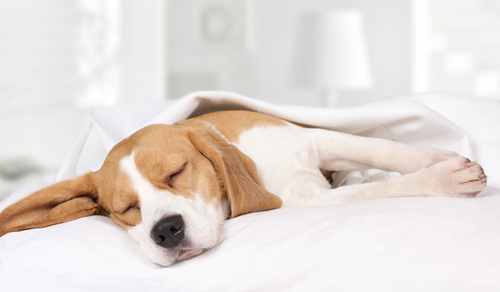 Who To Call When Pet Dog Dies At Home?
