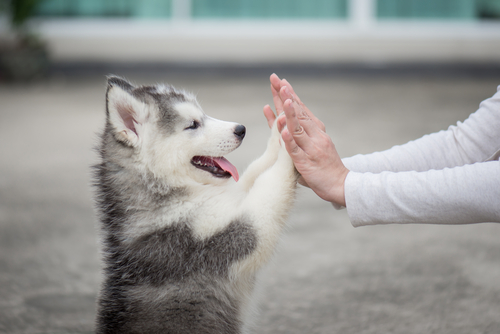 Which Dog Is Easiest To Take Care?