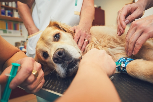 Can I Be With My Dog When He Passes Away After Euthanasia?